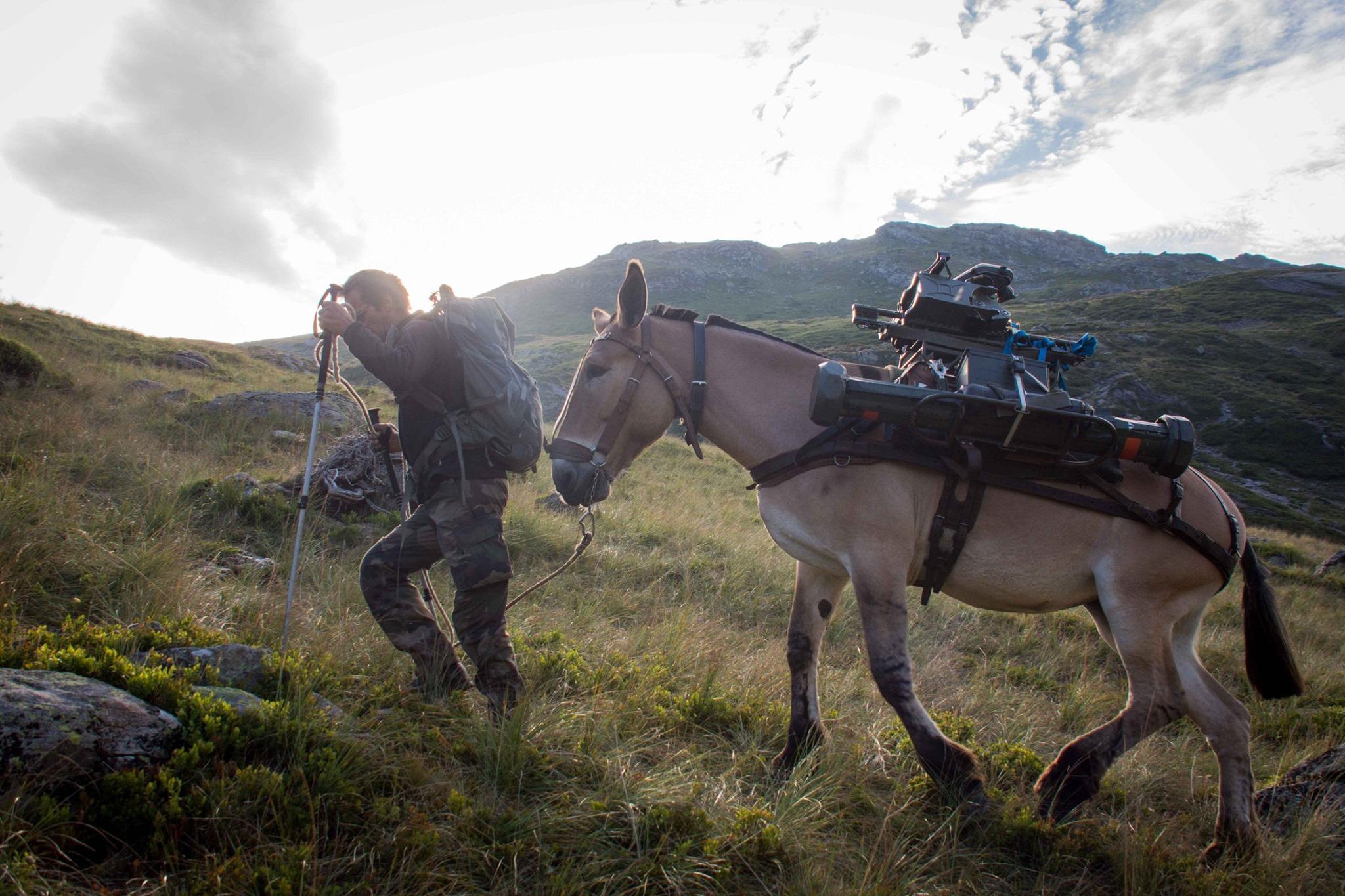 Le mulet prêt à reprendre du service dans les troupes de montagne. Le-mulet-pre%CC%82t-a%CC%80-reprendre-du-service-dans-les-troupes-de-montagne_001
